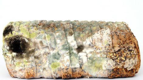 Brot, Schimmel, Verdorben